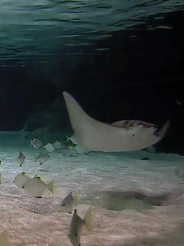 Reef Lagoon Live Webcam San Francisco CA
