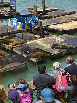 Pier 39 Sea Lion Live Webcam San Francisco CA