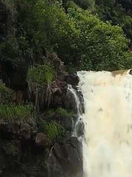 Waimea Falls, Oahu Live Webcam